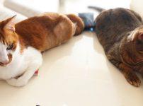 邪魔猫たち 予防美容でマイナス10歳肌 国立市フェイシャルエステサロンFEEL国立
