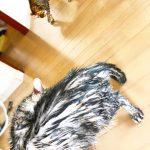 洗われた猫達 予防美容でマイナス10歳肌 国立市フェイシャルエステサロンFEEL国立
